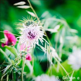 B. Galvána
