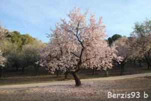 Berzis93b
