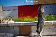 Bichejaa