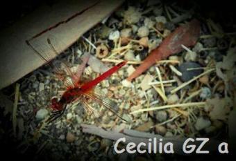 Cecilia GZa