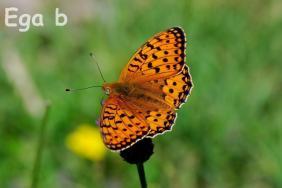 2.1-Mariposa.
