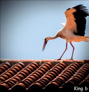 Kingb