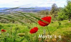 Primavera en Castellon