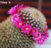 Ninab