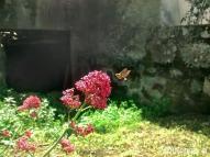 Quirogaa