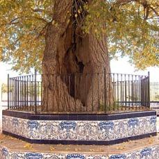 Fotos tejoydrago.blogspot.com.es