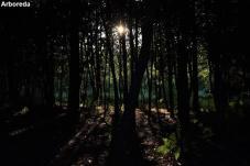 Arboreda