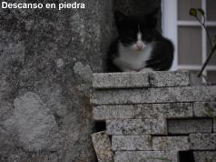 Descanso en piedra