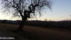 El árbol solitario
