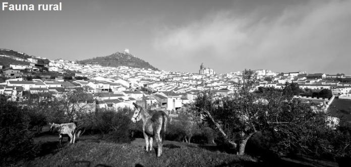 Fauna rural