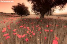 Primaverab