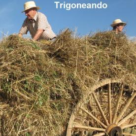 Trigoneando
