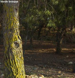 Verde bosque