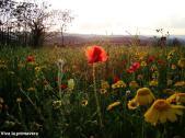 Viva la primavera
